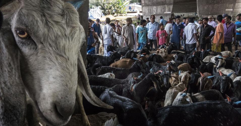 12.set.2016 - Pessoas visitam mercado local de cabras para o Festival Eid al-Adha em Calcutá, na Índia