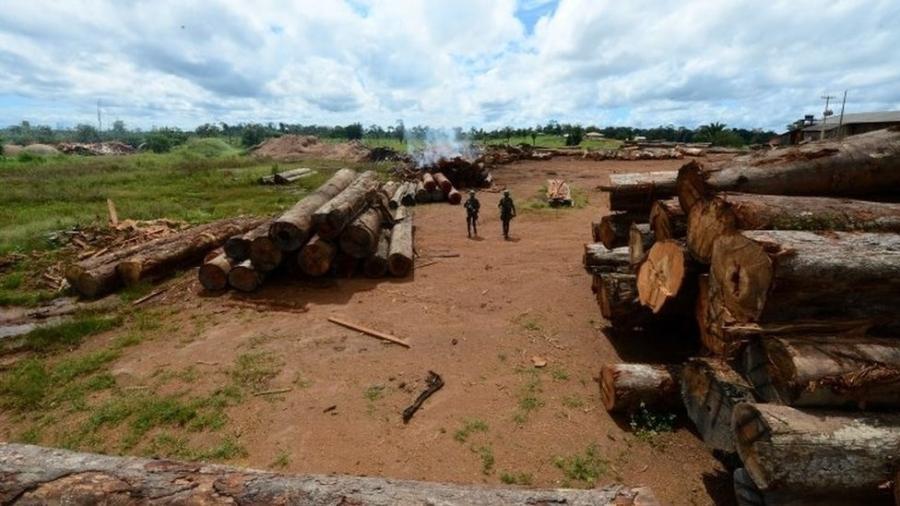 Em dezembro, a Polícia Federal fez apreensão recorde de madeira em região entre Pará e Amazonas - Reuters