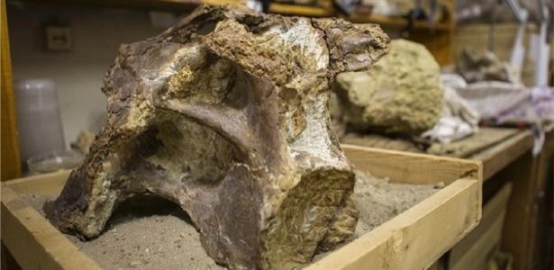 "Fóssil de titanossauro encontrado na Rússia, chamado de ""Sibirotitan astrosacralis"""