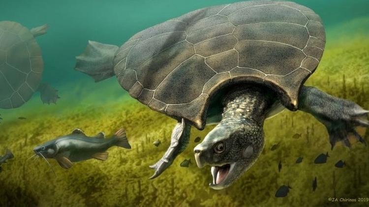 Viveu na Amazônia | Fóssil revela tartaruga pré-histórica do tamanho de um carro