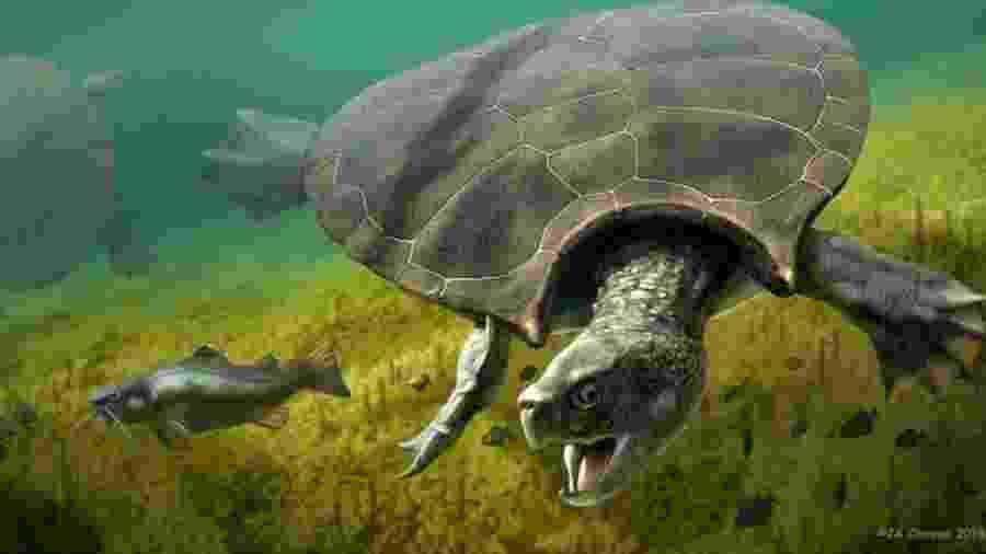 A espécie Stupendemys geographicus tinha aproximadamente o tamanho de um carro - PA Media