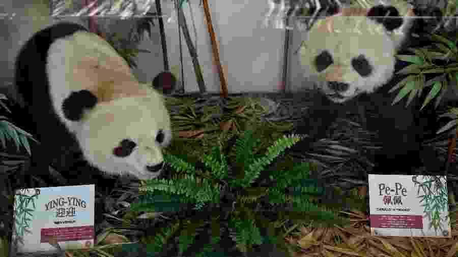 As fêmeas Shuan Shuan e Xin Xin, parentes de Ying Ying e Pe Pe. são as duas únicas pandas que não pertencem à China - ALFREDO ESTRELLA / AFP