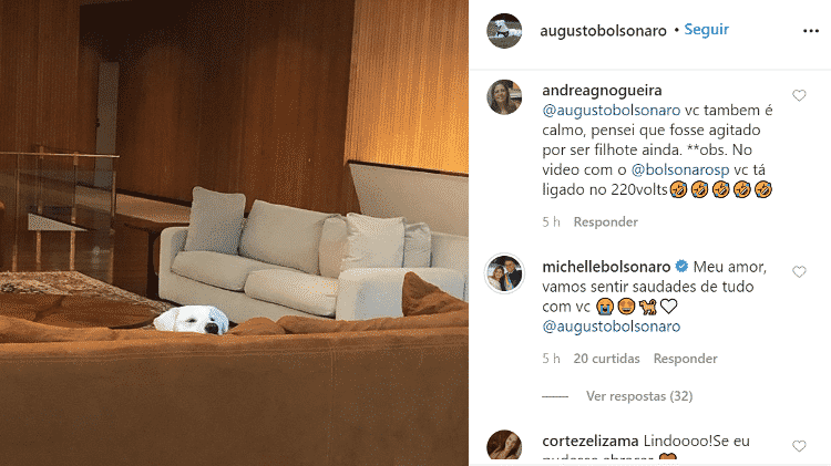 Michelle Bolsonaro se despede do cachorro Augusto; o comentário foi apagado depois pela primeira-dama - Reprodução - Reprodução