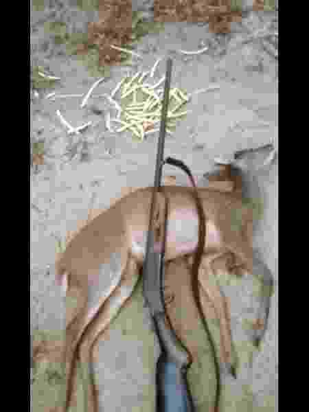 Caçador exibe imagem de veado abatido, no YouTube. Lei protege animais silvestres no Brasil - Reprodução