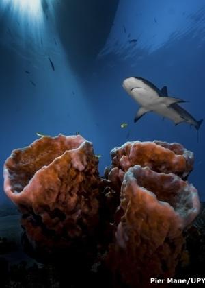 """19.fev.2016 - Pier Mane, da África do Sul, recebeu o título de Fotógrafo Submarino Iniciante do ano por sua imagem """"Three Pillars"""", captada nas Bahamas"""