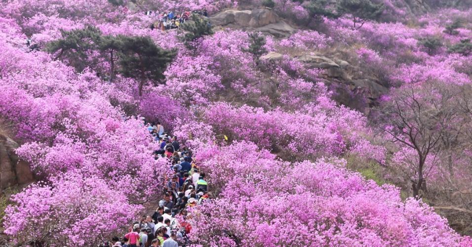 5.abr.2016 - Turistas passeiam entre azaleias floridas na monte Dazhu, localizado na cidade de Qingdao, leste da China
