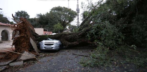 Entre segunda-feira (16) e terça-feira (17), os fortes ventos derrubaram 189 árvores