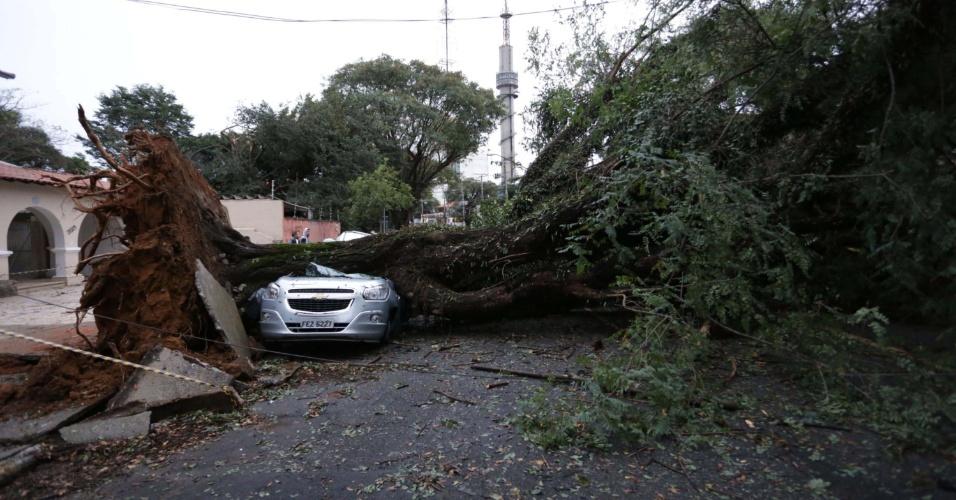 17.mai.2016 - Árvore segue caída na avenida Doutor Arnaldo, em Perdizes, em São Paulo, na manhã desta terça-feira (17). Mais de 170 árvores caíram com o vendaval que atingiu a cidade nesta segunda-feira (16).