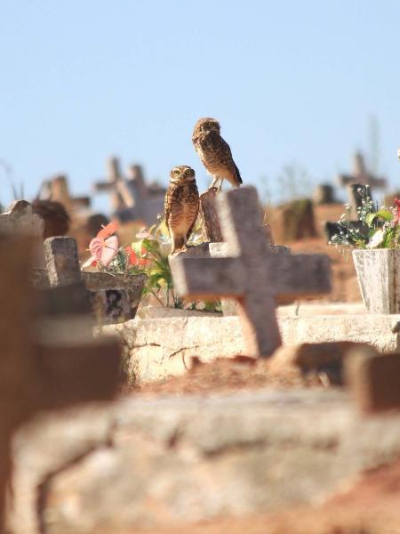1º.jun.2020 - Área destinada aos sepultamentos de vítimas da covid-19 no Cemitério São Francisco Xavier, na zona norte do Rio - Ellan Lustosa/Código19/Estadão Conteúdo