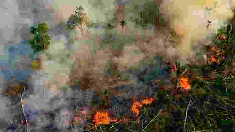 Incêndios florestais na Amazônia brasileira teriam voltado a níveis alarmantes de dez anos atrás - Getty Images - Getty Images