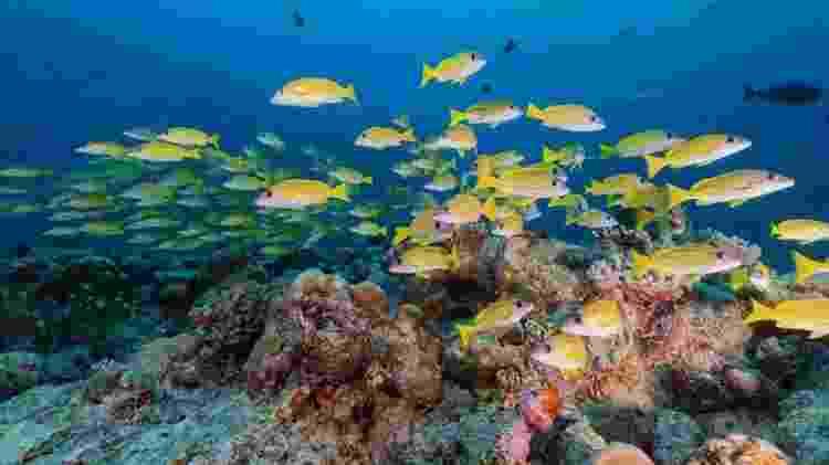 Larvas de peixes se orientam a partir dos sons emitidos pelos corais quando buscam um local para se fixar - RICHARD BROOKS/SCIENCE PHOTO LIBRARY - RICHARD BROOKS/SCIENCE PHOTO LIBRARY