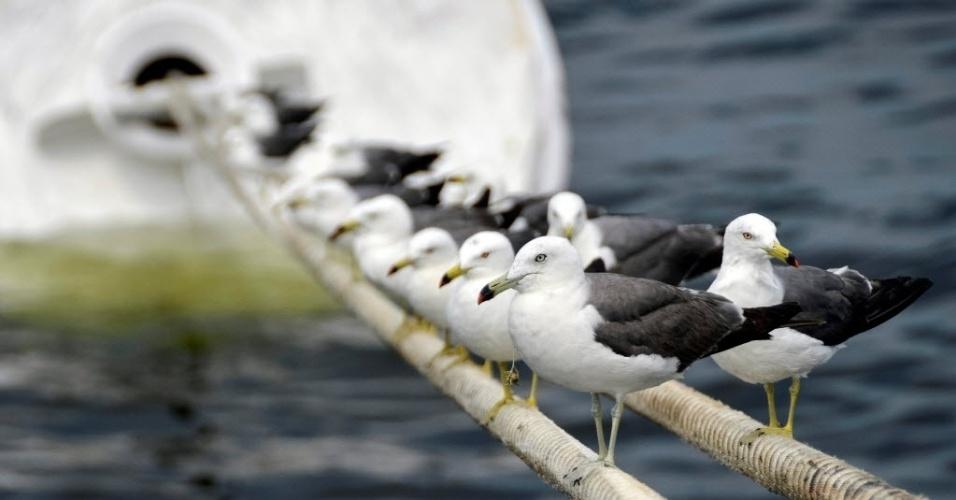 31.jul.2016 - Gaivotas se apoiam em uma corda amarrada a um navio da marinha russa atracado no porto de Vladivostok, na Rússia