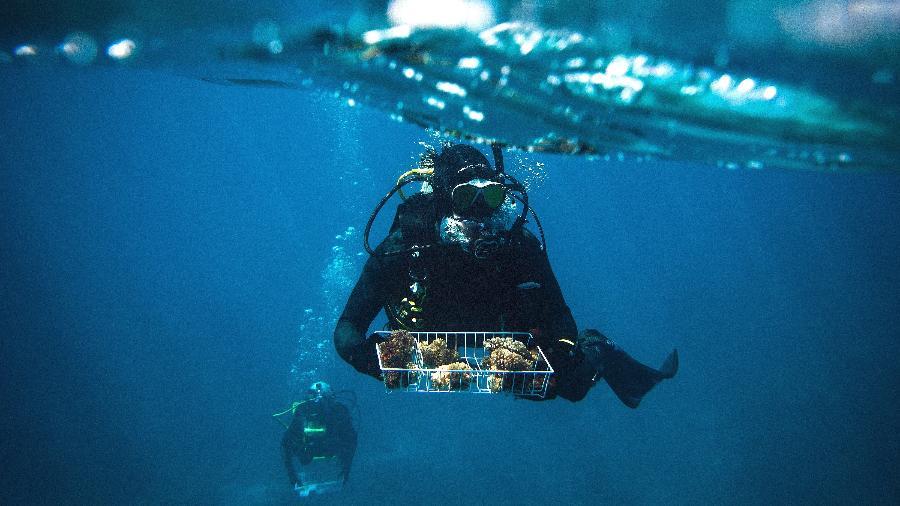 Pesquisadores coletam amostras de coral de Rib Reef, parte da Grande Barreira de Corais, em Queensland, na Austrália - David Maurice Smith/The New York Times
