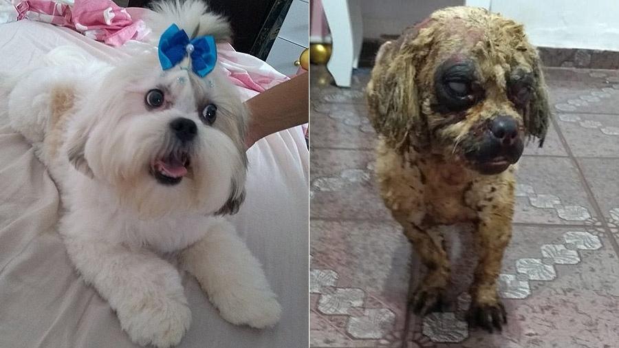 Bolinha antes e depois de ser atacada com ácido em São Manuel (SP) - Arquivo pessoal