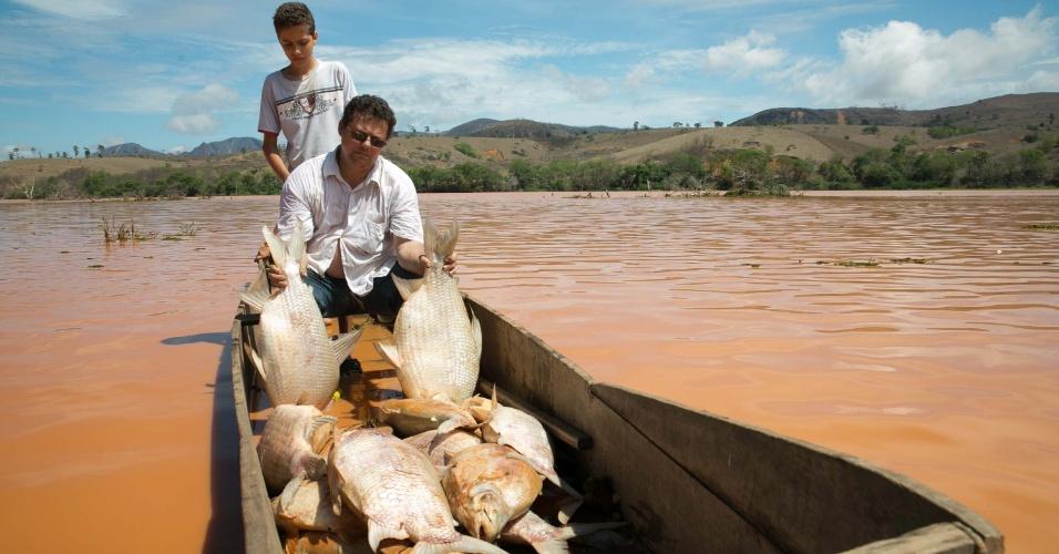 21.nov.2015 - Homem recolhe peixes mortos no rio Doce, em Baixo Guandu, no Espírito Santo, após lama com rejeitos de barragem de mineração que se rompeu ter atingido o rio