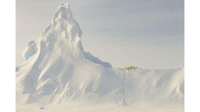 1º.jul.2016 - Por fim, a menção honrosa na categoria Natureza foi para John Rollins por esta imagem de ursos polares na costa da ilha Baffin, a quinta maior do mundo, no Canadá