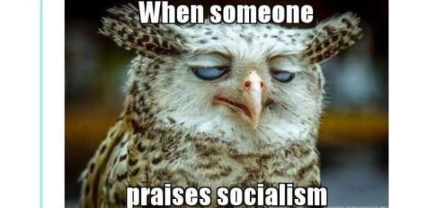 O tuíte da coruja que ironiza o socialismo viralizou nas redes sociais