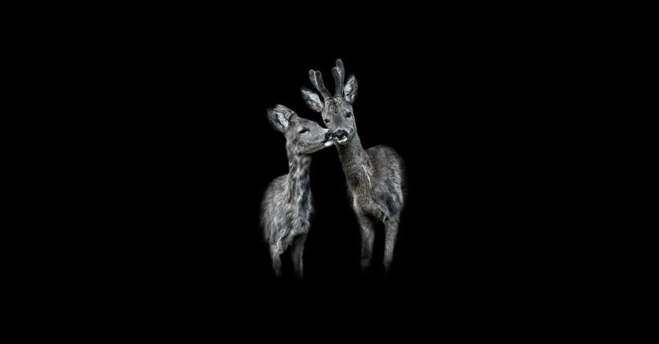 """31.mai.2016 - """"Os animais precisam vir até mim, não o contrário"""", disse Gotsch"""
