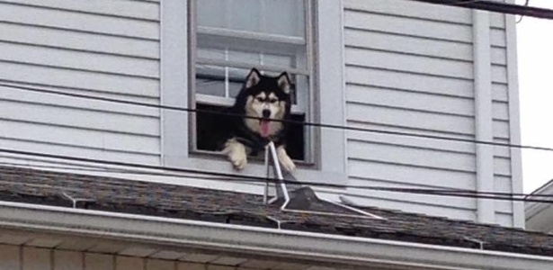 Maverick aproveitou que estava sozinho em casa para abrir a janela e escalar até o telhado