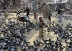 Ratos e pombos estão tomando lugar de outras espécies por causa da ação humana, aponta estudo - Getty Images