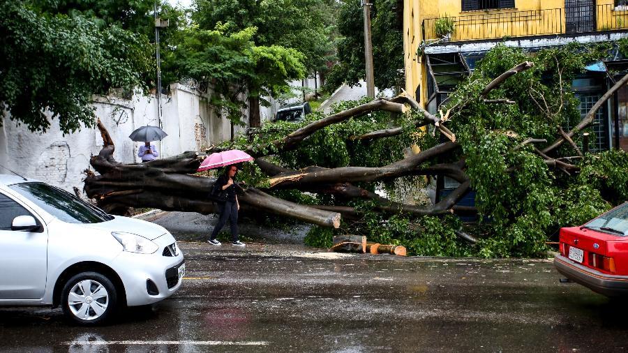 26.fev.2019 - Árvore é vista caída na Avenida Maria Amália, no Tremembé, Zona Norte de São Paulo  - NEWTON MENEZES/FUTURA PRESS/FUTURA PRESS/ESTADÃO CONTEÚDO