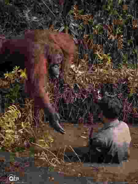 Orangotango estende a mão para guarda  - Reprodução/Instagram/anil_t_prabhakar
