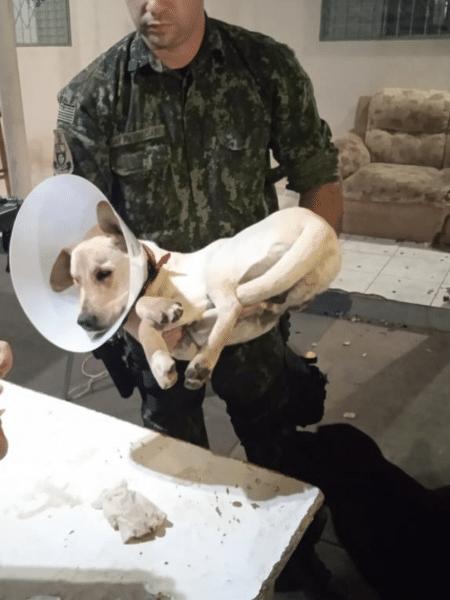 Cachorro foi resgatado na segunda (14) com sinais de maus-tratos - Reprodução/Polícia Militar Ambiental de Presidente Prudente