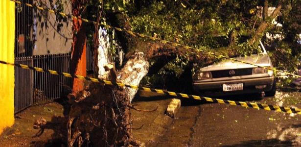 Árvore caiu sobre um carro no bairro Vila Nova Cachoeirinha, na zona norte de São Paulo