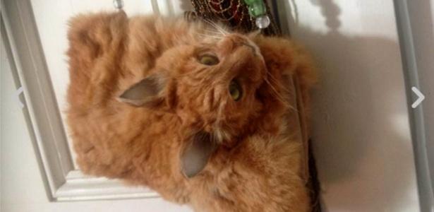 Taxidermista transformou gato morto em uma bolsa  - TradeMe/ClaireThird