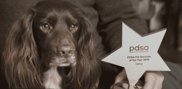 Cachorrinha Darcy caiu de uma altura de 18 metros, mas sobreviveu e hoje está bem - Reprodução/PDSA