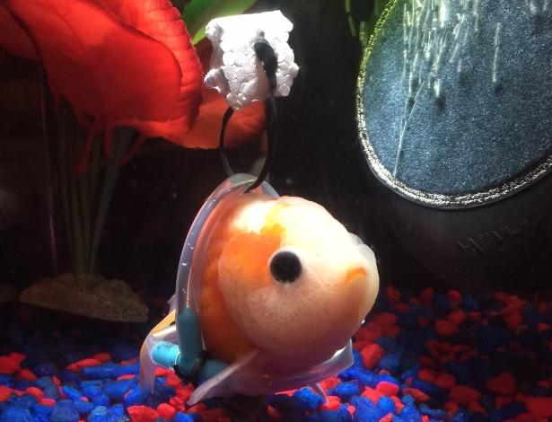 O peixe sofre de um problema na bexiga e, por isso, não consegue boiar direito