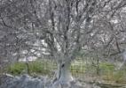 Árvore coberta por teias de lagartas surpreende na Inglaterra - Rich Sutcliffe