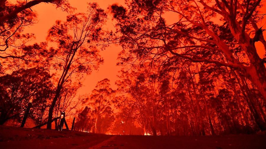 Incêndio florestal na Austrália dia 31 de dezembro de 2019 - SAEED KHAN / AFP