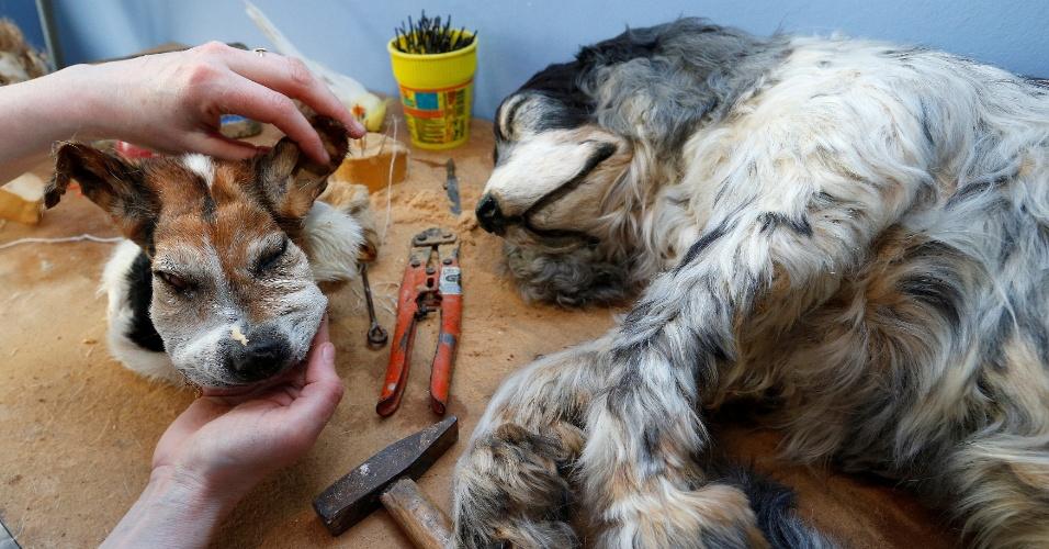 20.mai.2016 - Além de funerais e cremação, a Animatrans também empalha os animais de estimação para os donos. Na imagem, a taxidermista Cathy Vertongen trabalha em cães mortos no seu atelier, em Aalst, na Bélgica