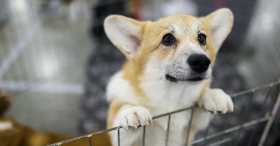 24.jun.2016 - Um cachorro participa do Show Mundial de Cães em Moscou, na Rússia. O evento reúne mais de 27 mil animais de 40 países diferentes