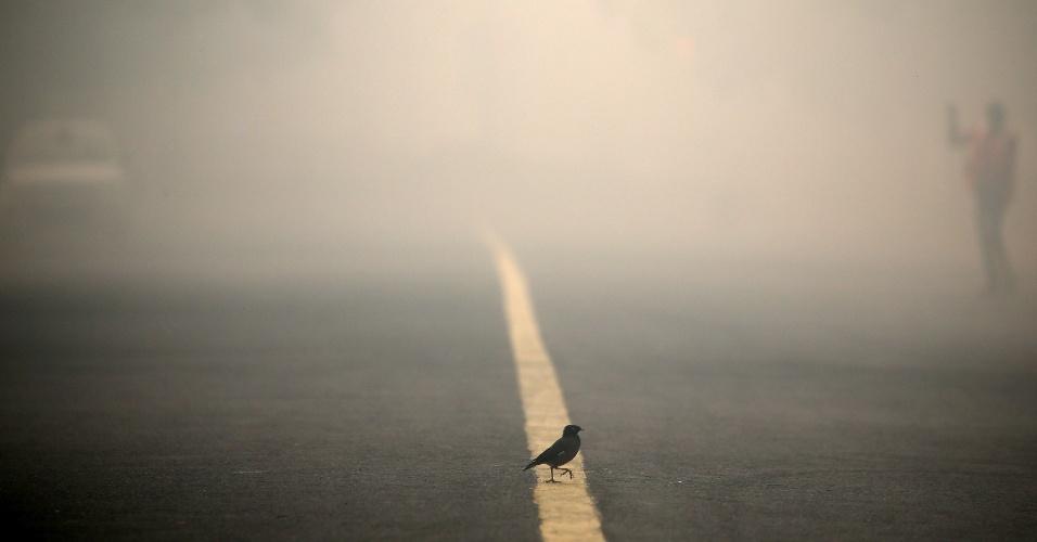 31.out.2016 - Pássaro atravessa uma estrada coberta de fumaça de poluição e fumaça em Nova Deli, na Índia