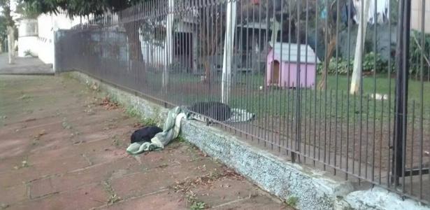 Cadela divide seu cobertor com cachorro de rua, em foto que viralizou no Facebook