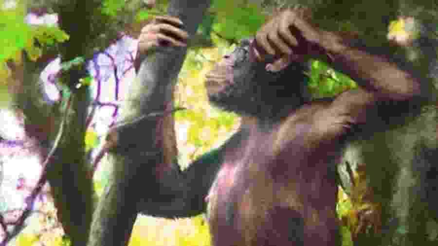 Danuvius guggenmosi tinha braços similares ao de um bonobo, mas pernas como de hominídeos - Velizar Simeonovski/BBC