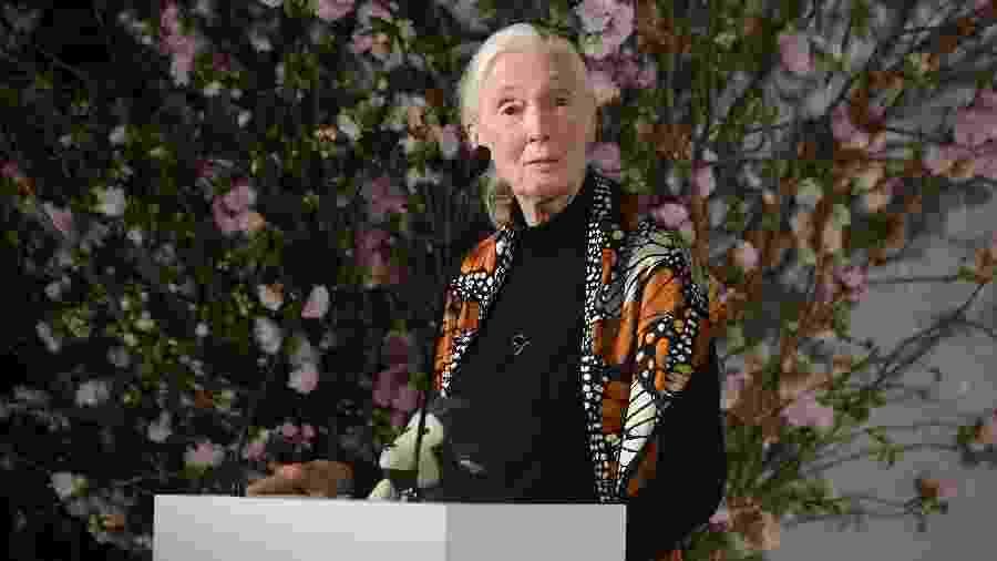 Na entrevista, Jane Goodall relacionou a pobreza e pandemia do novo coronavírus ao desmatamento - Jamie McCarthy/Getty Images