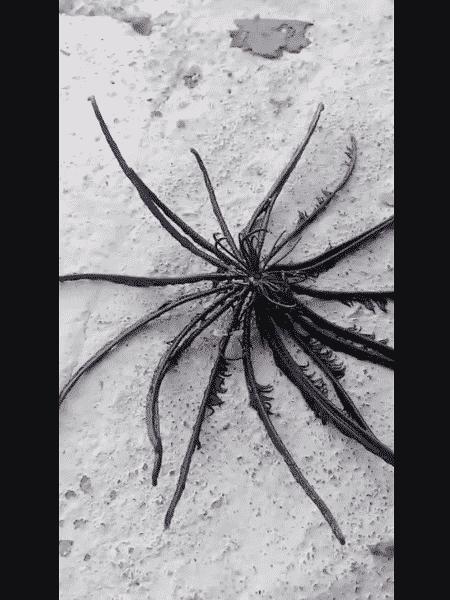 O registro de uma criatura marinha com mais de 20 tentáculos peludos assustou um pescador na Tailândia nos últimos dias - Reprodução