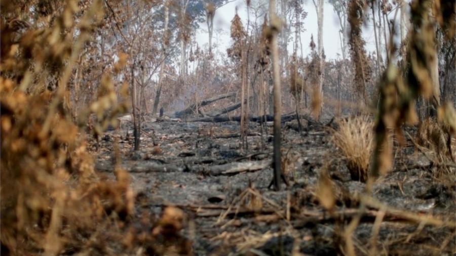 Área queimada em 2020 perto de Apuí, no estado do Amazonas - Reuters