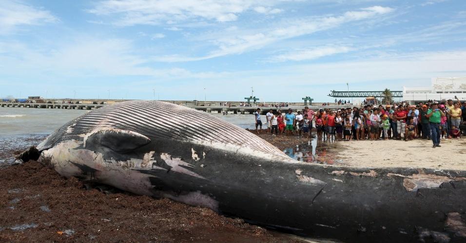 29.fev.2016 - Dezenas de moradores observam baleia encontrada morta neste domingo (28) em praia de Progreso, localizada no Estado de Yucatan, no México. O animal tem cerca de 12 metros de comprimento e 10 toneladas. De acordo com a mídia local, é a primeira baleia encontrada morta na costa da cidade - nas últimas semanas, no entanto, foram encontrados algumas carcaças de golfinhos em algumas praias