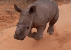 Reprodução/Working With Rhinos