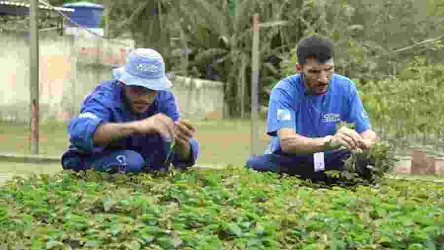 Projeto de recuperação de matas ciliares no Rio de Janeiro tem hoje 35 detentos trabalhando em colônia penal. - BBC