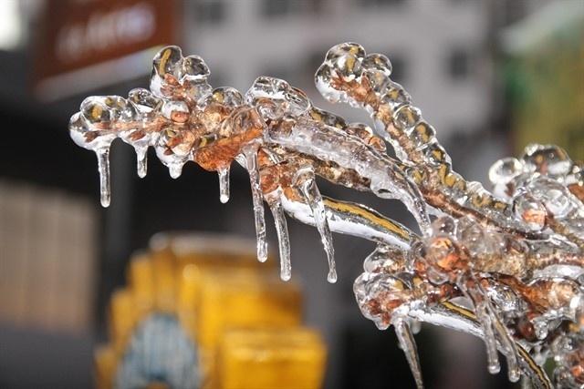 9.jun.2016 - A cidade São Joaquim, na serra catarinense, conhecida por registrar temperaturas negativas durante o inverno, amanheceu coberta pelo gelo. Os termômetros chegaram a -8ºC em alguns pontos. O gelo se acumulou nas árvores e pelas ruas