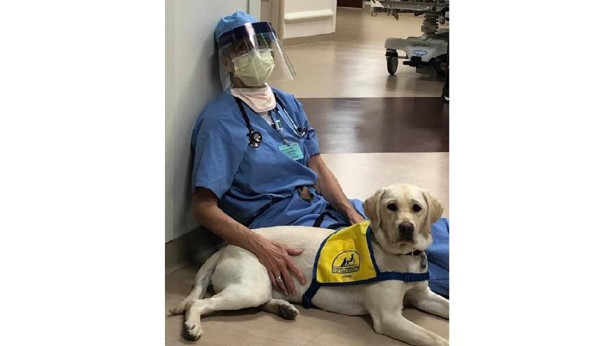 Cão Wynn tem ajudado médicos em um hospital em Denver - Reprodução/Susan Ryan