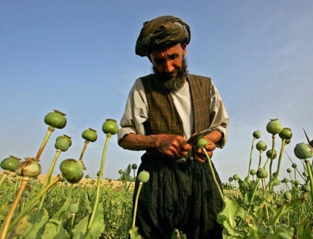 Agricultor afegão coleta flores da papoula, de onde é extraído o ópio, um poderoso analgésico que é a base da morfina e heroína. A foto foi tirada em uma vila a 500 km de Cabul, capital do Afeganistão