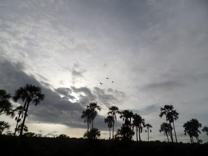 Paisagem do Parque Nacional Grande Sertão Veredas, em Minas Gerais