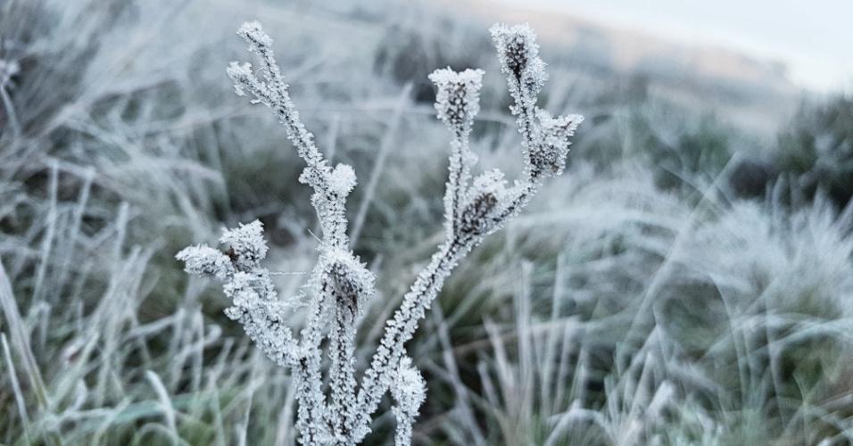 7.jun.2018 - A região Sul do país já registra temperaturas negativas e geadas antes mesmo do início do inverno. Em São Joaquim (foto), Santa Catarina, os termômetros marcaram -1,5ºC