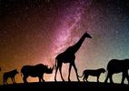 Não é vaga-lume ou criação da ciência: existe animal que brilha no escuro? (Foto: chiplanay/ Pixabay)